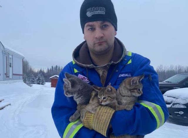 Мужчина спас троих котят примерзших хвостиками к дороге обычным кофе