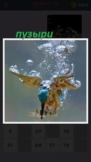 655 слов птица ныряет за рыбой и пузыри вокруг неё 20 уровень