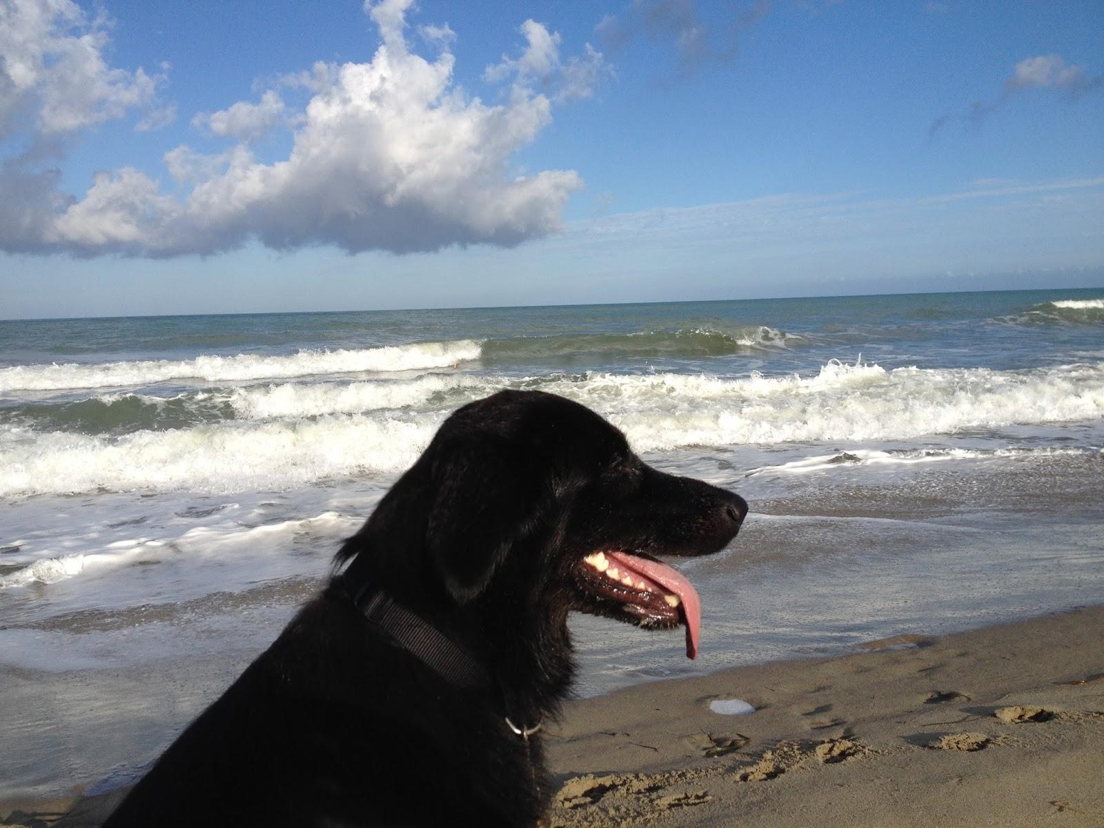 Bovenlijf van zittende Wilka met op de achtergrond strand, zee en lucht