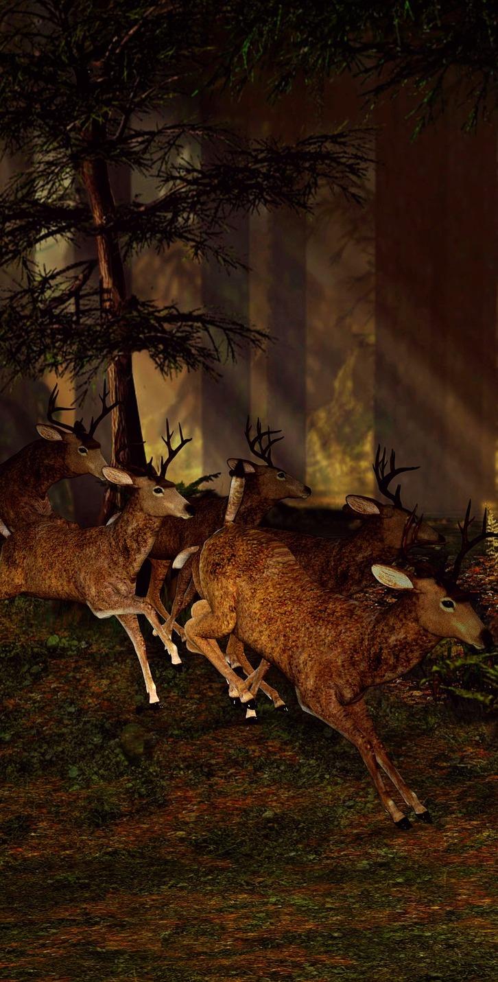 Deers running.