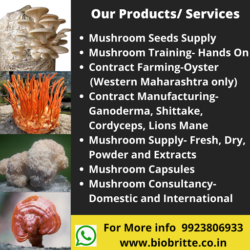Our Mushroom Products and Services