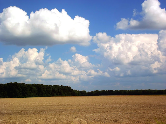 Indiana Photo of the Day - Newly Planted Corn Fields - Michigan Road, Napoleon Indiana