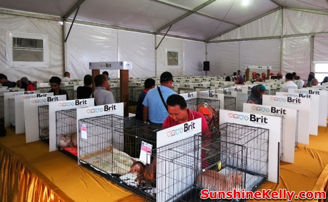MaTiC Fest 2013, Locals and Tourists, Matic, malaysia tourism center, cat competition, cat exhibition, cat, brit