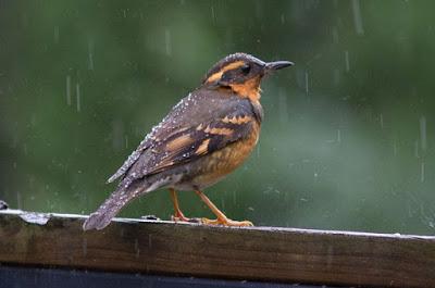 Khasiat/Manpaat Dan Harga Obat Burung Pilek Terbaru Paling Lengkap
