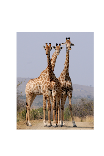 animals images for kids