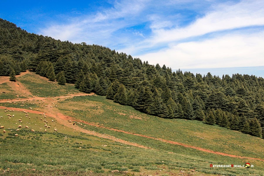 Parque Nacional del Jabel Tazeka, Marruecos
