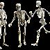 Cara Menjaga Kesehatan Tulang Yang Bisa Kamu Terapkan Dengan Mudah Saat Ini