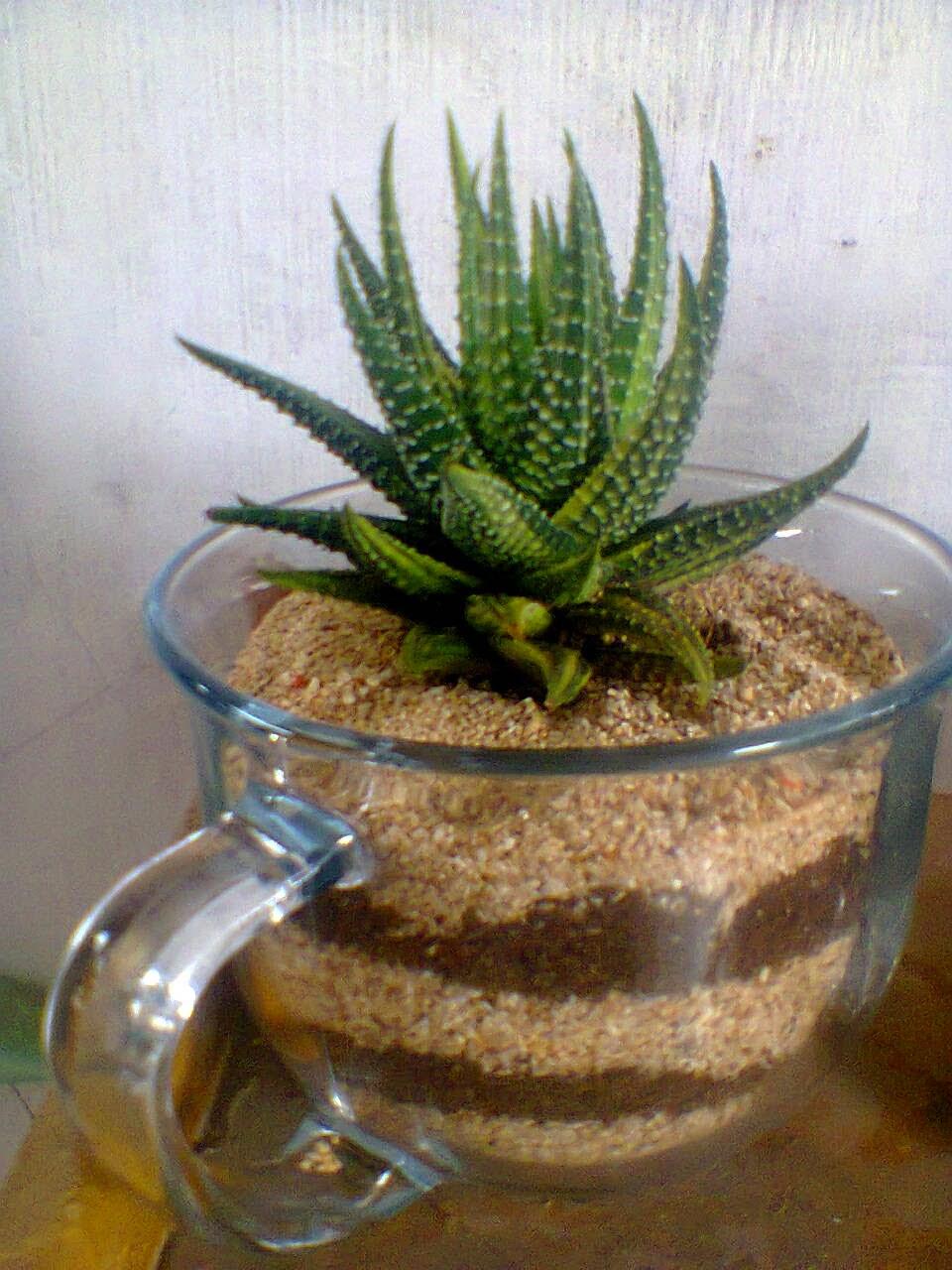 Teman Tanam Aneka Kaktus Hias Mini