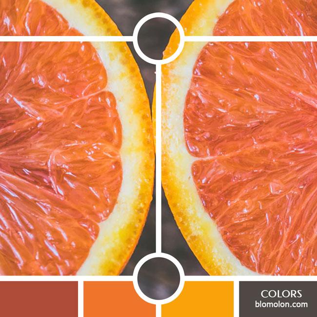 variedad_en_color_color_28