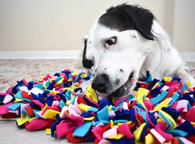 A black and white dog is sniffing a very colourful snuffle mat made of lots of little pieces of fabric