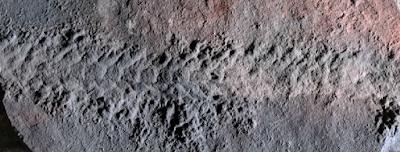 Ανακαλύφθηκε απολίθωμα εντόμου: σερνόταν πριν από 550 εκατ. χρόνια