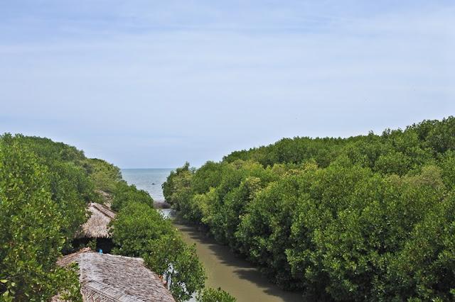 Dewi Mangrovesari Brebes