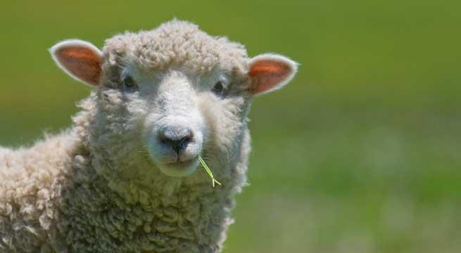 Ώρα της Γης 2018: Το Σάββατο σβήστε όλα τα δίποδα πρόβατα τα φώτα!!
