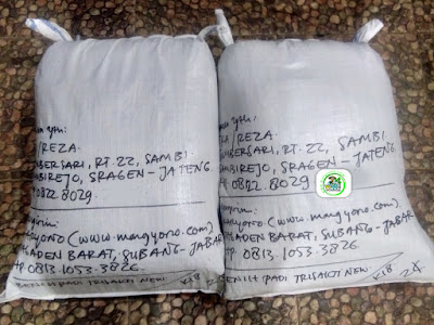 Benih padi yang dibeli   Eka Sragen, Jateng.  (Setelah packing karung ).