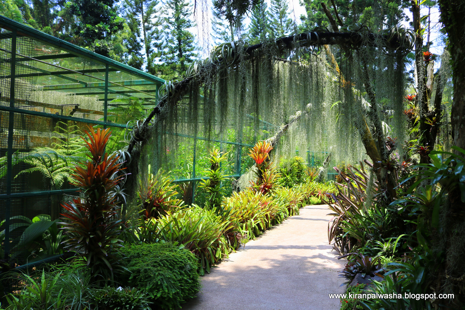 Singapore Botanical Garden Is One Of The Best Gardens And Inside Is Located  National Orchid Garden Too. Orchid Is Singapore National Flower.