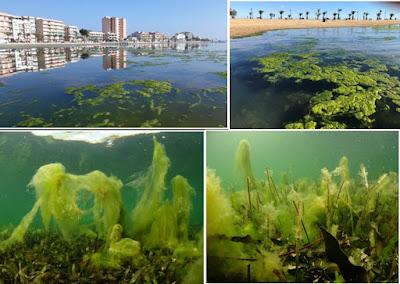 NP 290920 marmenor - El informe de evaluación del Mar Menor elaborado por el IEO concluye que su recuperación pasa por atajar la entrada de sedimentos y nutrientes a la laguna