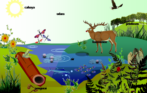 Sistem Ekosistem yang ada pada Ekosistem
