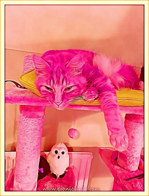 Fudge's Flat Out Selfie ©BionicBasil® Caturday Art Hop