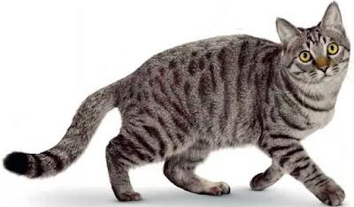 Kucing Li Hua Mau