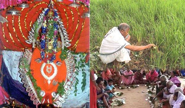 nua-khai-festival-history-in-hindi