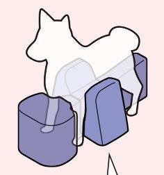 cães em tratamento muscular