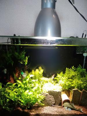 IKEA植物育成用LED電球を45cm規格水槽で利用してみる実験(ガラス蓋直乗せ)