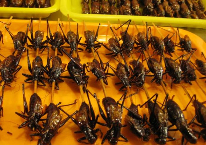7 Serangga yang Bisa Dimakan dan Rasanya Lezat, freaky food, makanan extrim, makanan unik, nafsu makan, survival food, makanan aneh, asing, Jangkrik, Jangkrik bakar, Jangkrik goreng, jangkrik eni, jangkrik indonesia, jangkrik adalah, jangkrik wikipedia, klasifikasi ilmiah jangkrik, jangkrik in english, jangkrik hijau, jangkrik meaning, info kuliner yang beda