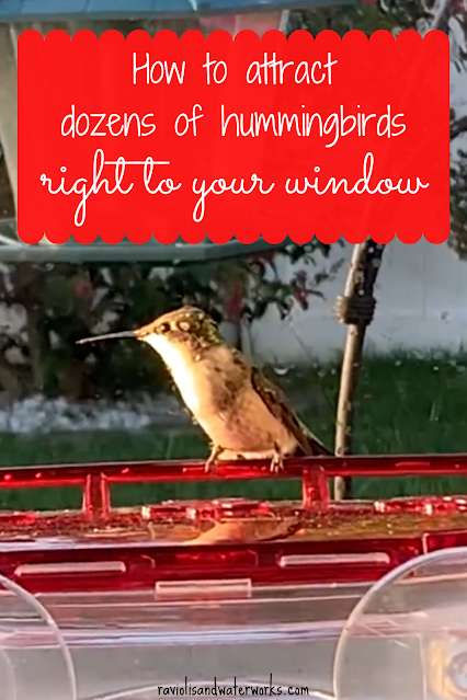 hummingbird window feeder that works; how to really attract hummingbirds; window feeder