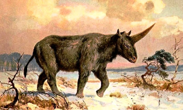 Unicorns and Humans Once Coexisted, Fossil Suggests