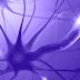 المشابك الكهربائية والهيكل الداخلي للخلايا العصبية