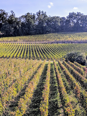 What to see in St. Emilion: vineyards