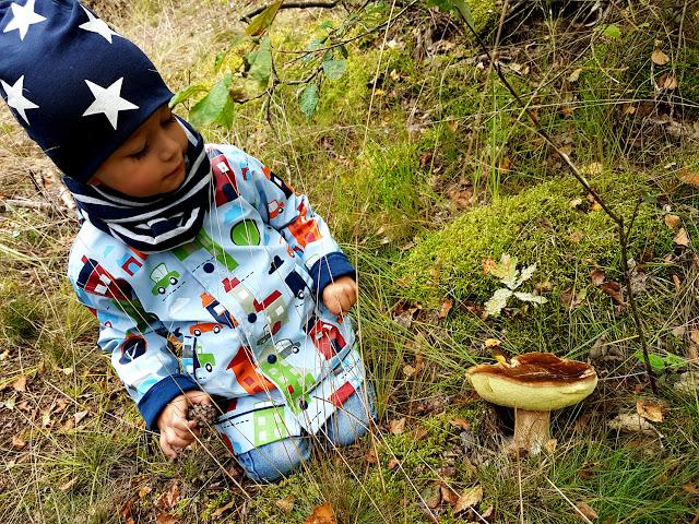jesień las grzyby grzybobranie