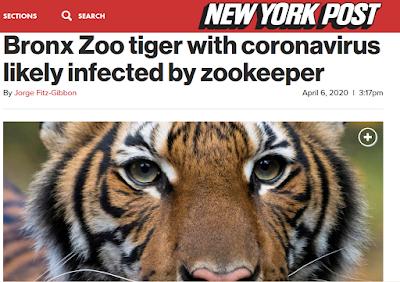 Tigern har fått sin fladdermus... Och Stockholm har sina 99:or.
