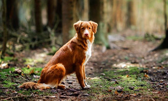 Kiedy człowiek udomowił psa?
