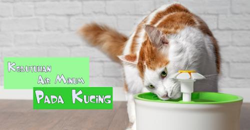 Air Hangat Untuk Minum Kucing