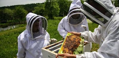 Εθνικό Ηλεκτρονικό Μελισσοκομικό Μητρώο | Διευκρινίσεις σχετικά με την εφαρμογή του