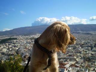 εκπαίδευσης σκύλου στην Αθήνα