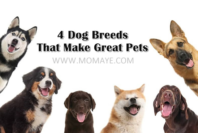 pets, dogs, home and living, home, pet-lovers, 4 dog breeds as pets