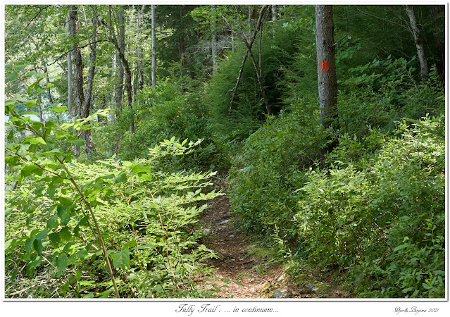 Tully Trail: ... in continuum...