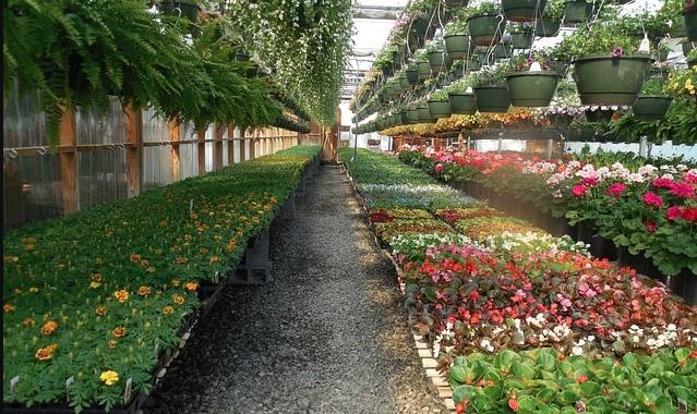 Top 60 Agricultural Business Ideas for Aspiring Entrepreneurs