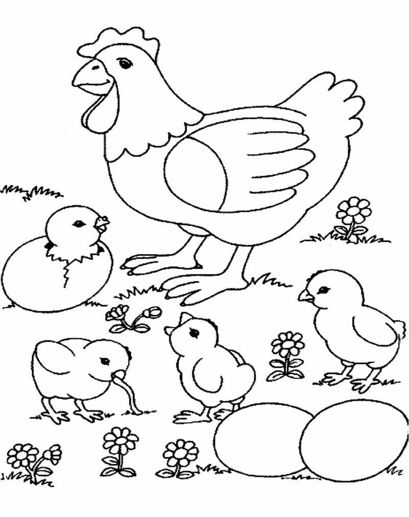 Aneka Gambar Mewarnai - Gambar Mewarnai Ayam Untuk Anak PAUD dan ...