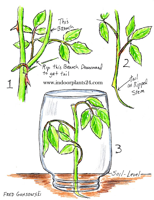 House Plant Propagation technique 2017