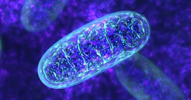 The Emerging Role Of Nrf2 In Mitochondrial Function | El Paso, TX Chiropractor