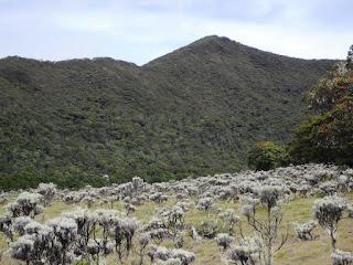 Jalur Pendakian Gunung Gede Favorit Pendaki