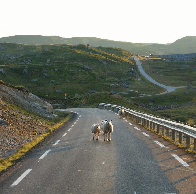 Allemannsretten: o direito de pernoitar de graça num motorhome na Noruega e Suécia