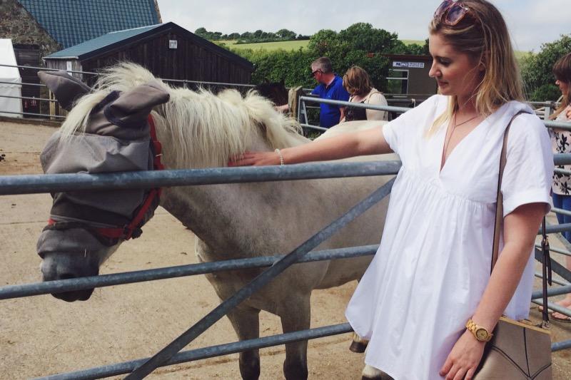Isle of Wight, Isle of Wight Donkey Sanctuary, things to do on Isle of Wight, travel blogs UK, UK lifestyle bloggers