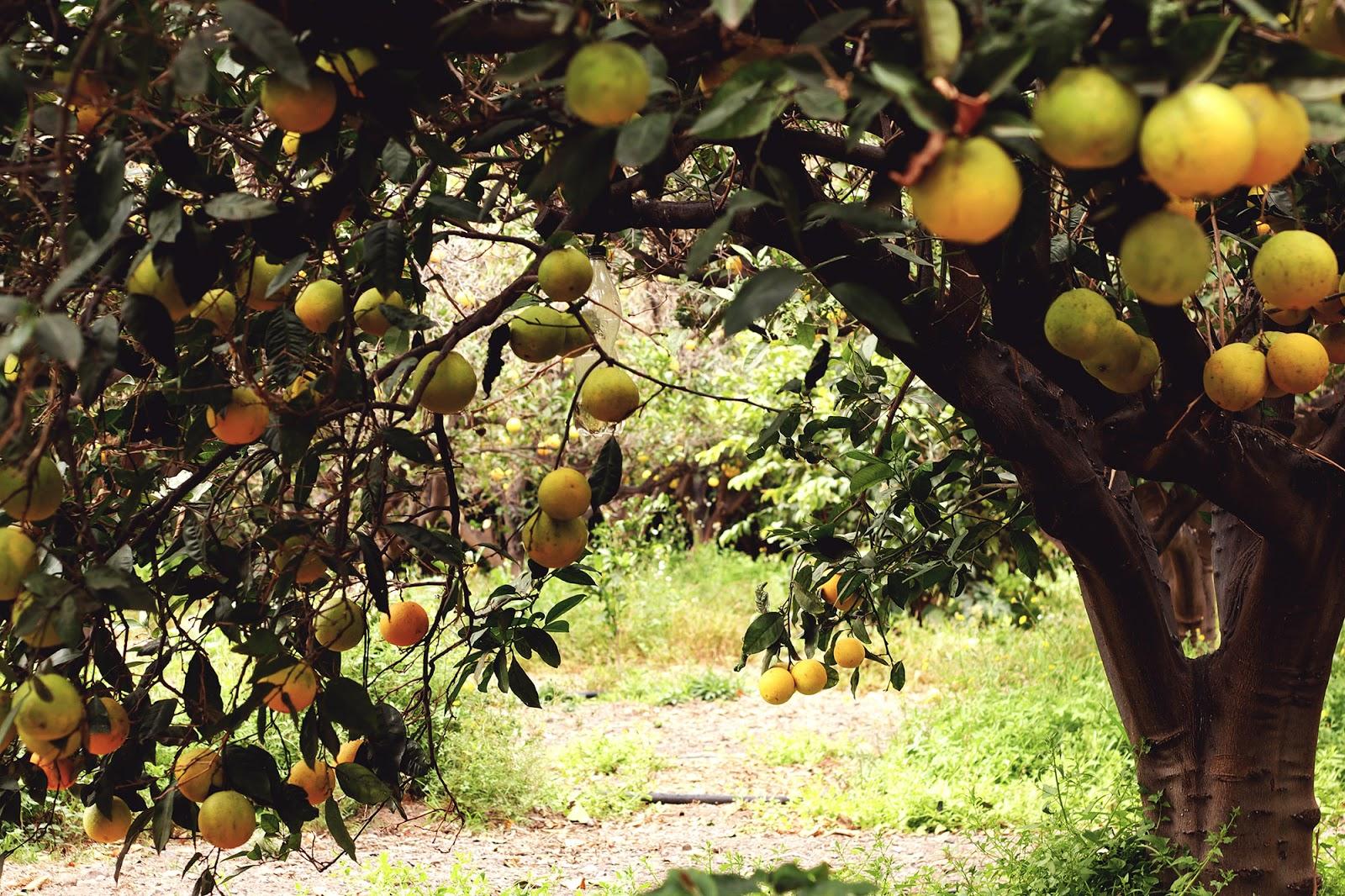 Co zjeść na Wyspach Kanaryjskich, czyli jak smakuje Gran Canaria