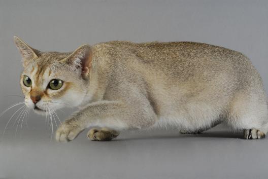 Kot - drapieżnik doskonały