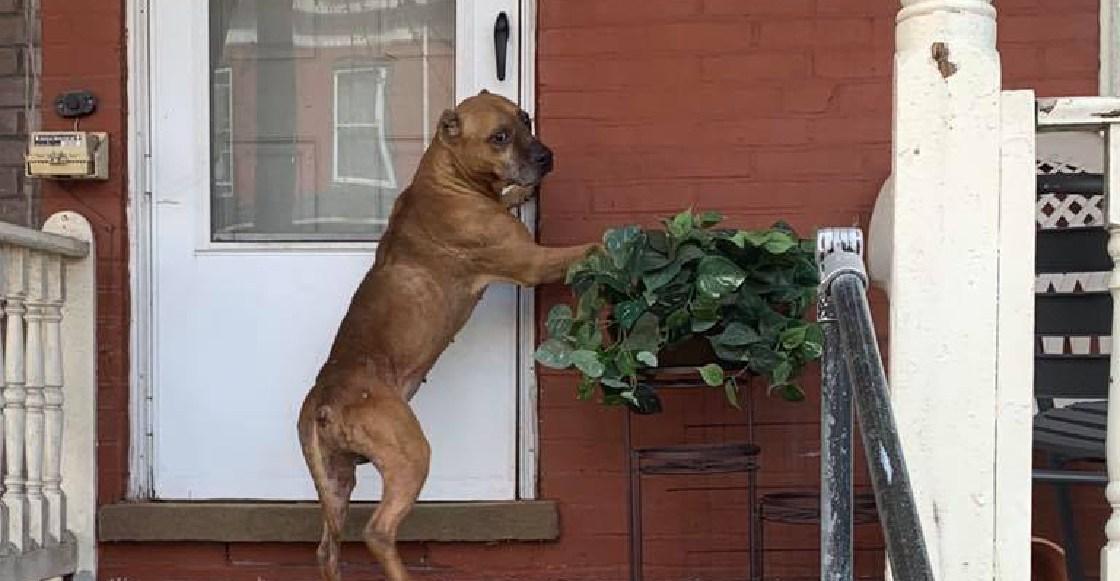 Cupido, 20 días esperando a sus dueños en la puerta