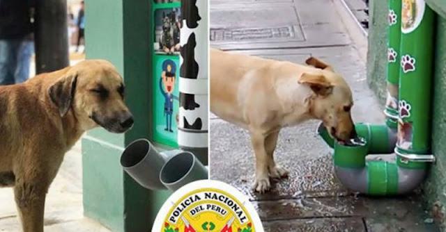 Автоматы по раздаче воды и еды для голодных бродячих животных установила полиция Перу